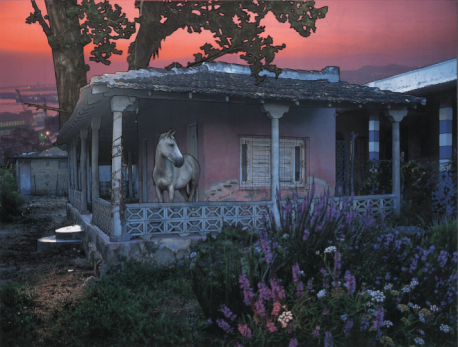 White horse standing on the porch of a small pink house at sunset