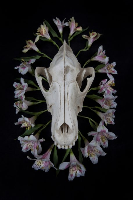 Wolf skull surrounded by a circle of lilies